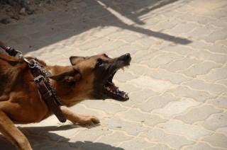 dog-agresivo