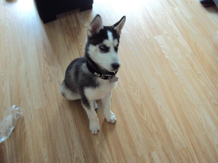 http://psicologiaveterinaria.com/wp-content/uploads/2016/10/Cachorro-sentado.jpg